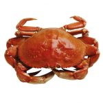 how-long-does-uncooked-crab-last-in-the-fridge